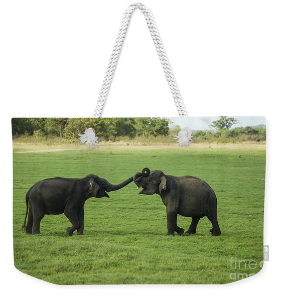 Two Young Male Elephantys Play Fighting Weekender Tote Bag