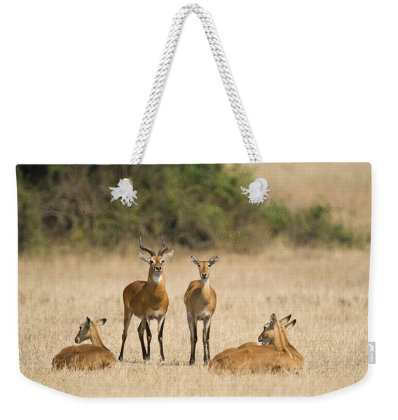 Ugandan Kobs Kobus Kob Thomasi Mating Weekender Tote Bag