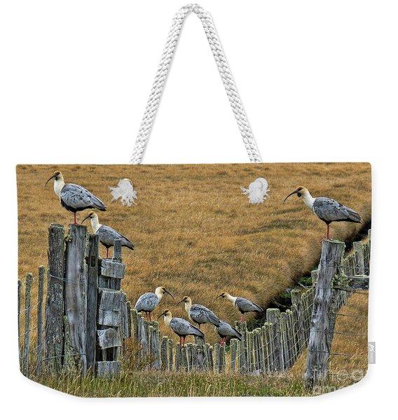 End Of The Road Birds Weekender Tote Bag