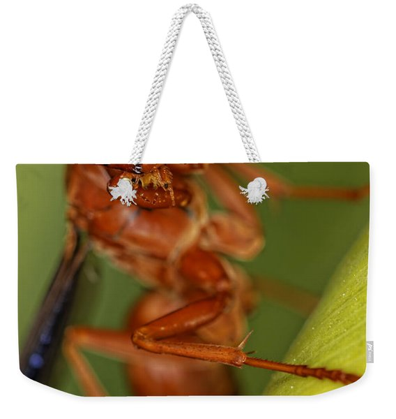 Wasp 3 Weekender Tote Bag
