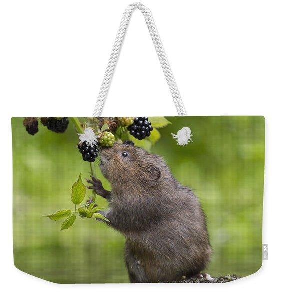 Water Vole Eating Blackberries Kent Uk Weekender Tote Bag