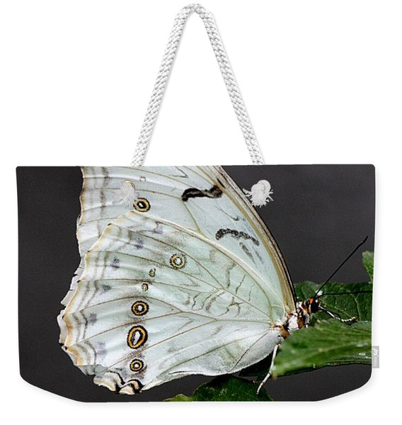 Weekender Tote Bag featuring the photograph White Butterfly by Jeremy Hayden