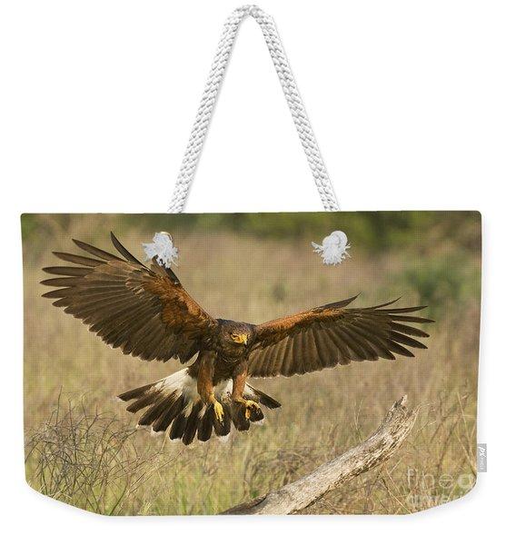 Wild Harris Hawk Landing Weekender Tote Bag