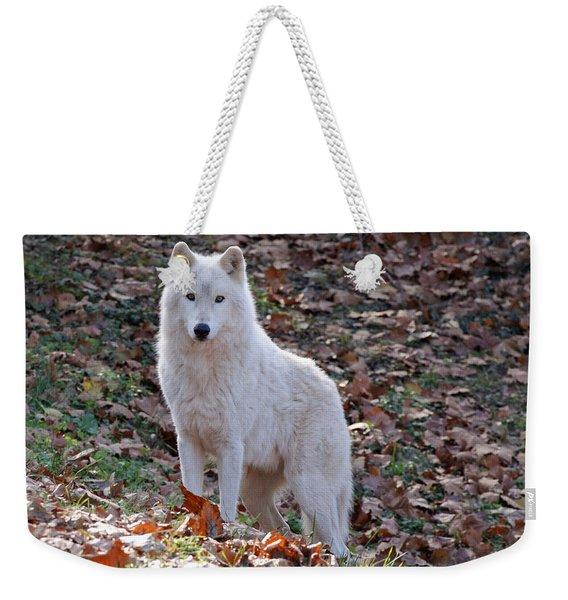 Wolf In Autumn Weekender Tote Bag
