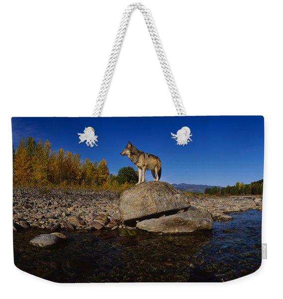 Wolf Standing On A Rock Weekender Tote Bag