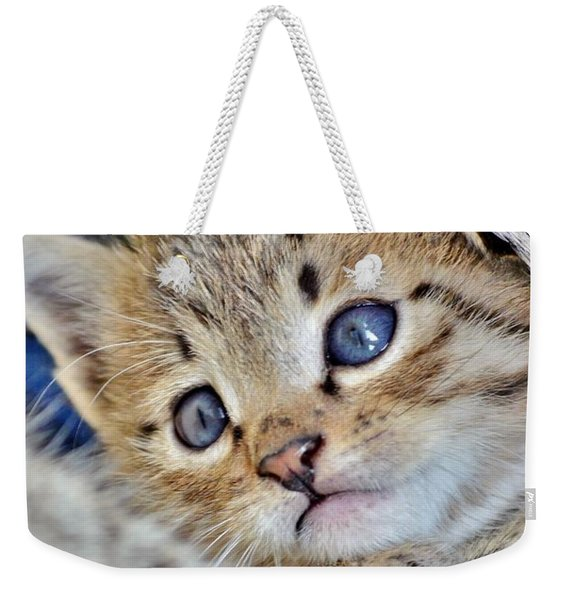 Weekender Tote Bag featuring the photograph Wrapped In Mother's Love by Kim Bemis