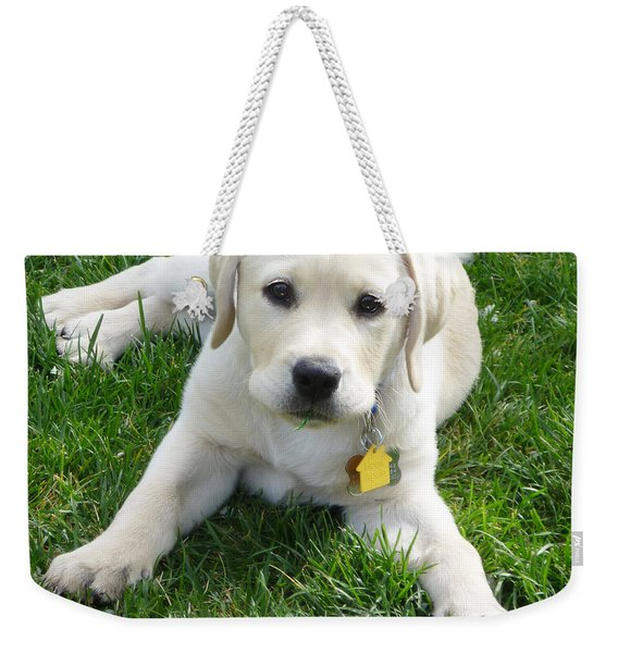 Yellow Lab Puppy Got A Ball Weekender Tote Bag