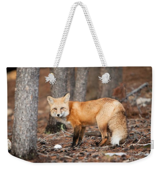 Weekender Tote Bag featuring the photograph You Caught Me by John Wadleigh