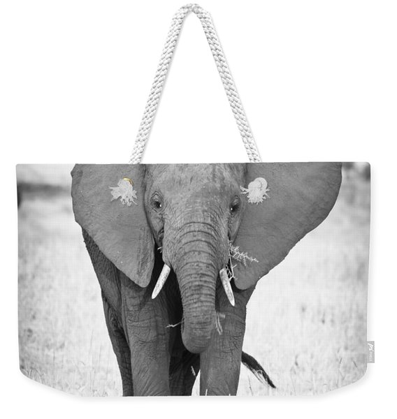Young Bull Elephant Weekender Tote Bag