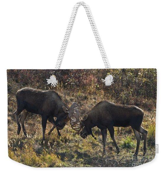 Young Bull Moose Sparring Weekender Tote Bag