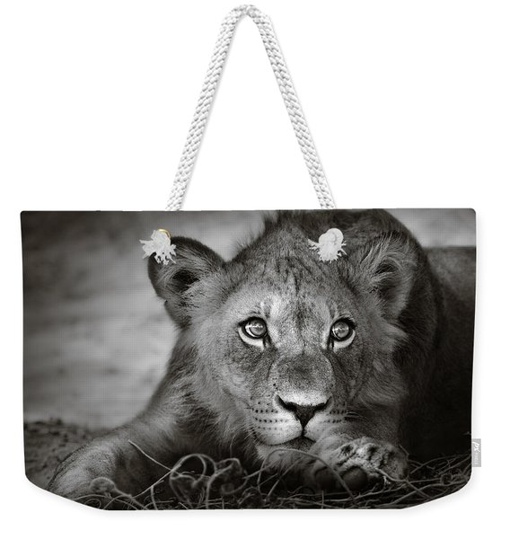 Young Lion Portrait Weekender Tote Bag
