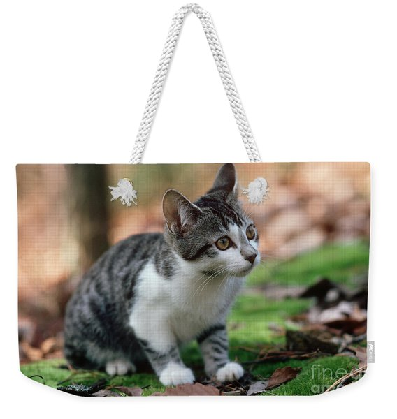 Young Manx Cat Weekender Tote Bag