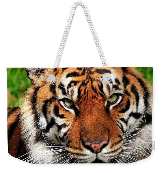Sumatran Tiger Portrait Weekender Tote Bag