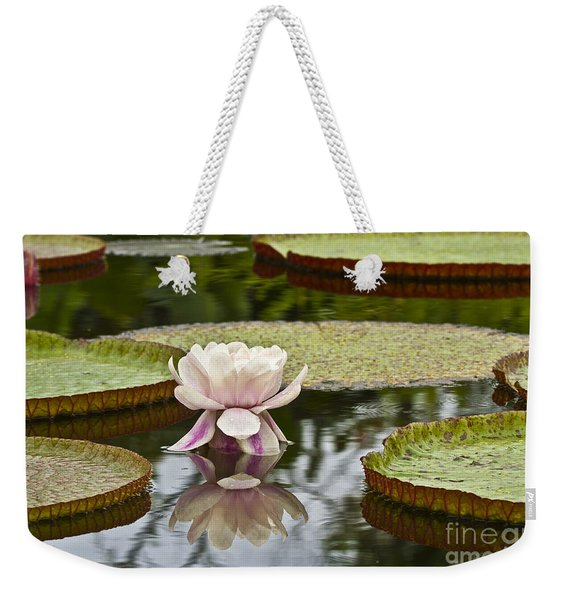 Victoria Amazonica Flowering Weekender Tote Bag