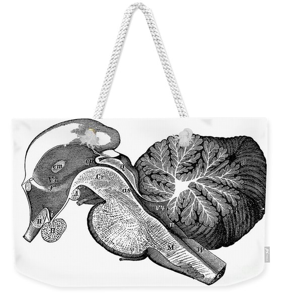 Third And Fourth Ventricles Of The Brain Weekender Tote Bag