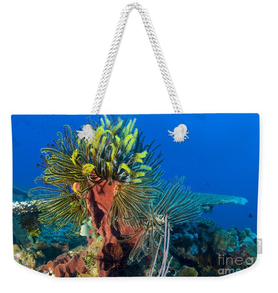 A Colony Of Feather Stars Attached Weekender Tote Bag