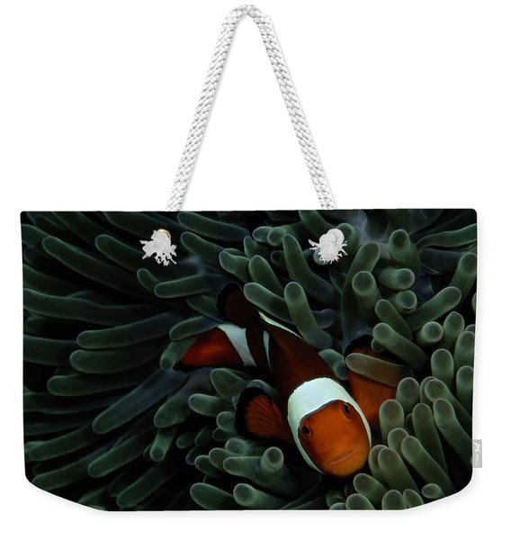 A False Clown Anemonefish Amphiprion Weekender Tote Bag