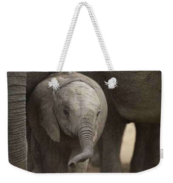 A Juvenile Elephant Standing Amongst Weekender Tote Bag