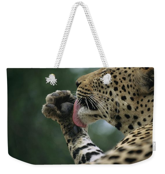 A Leopard Uses Tongue Against Paw Weekender Tote Bag