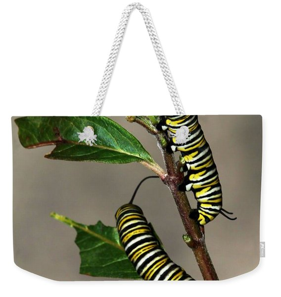 A Pair Of Monarch Caterpillars Weekender Tote Bag