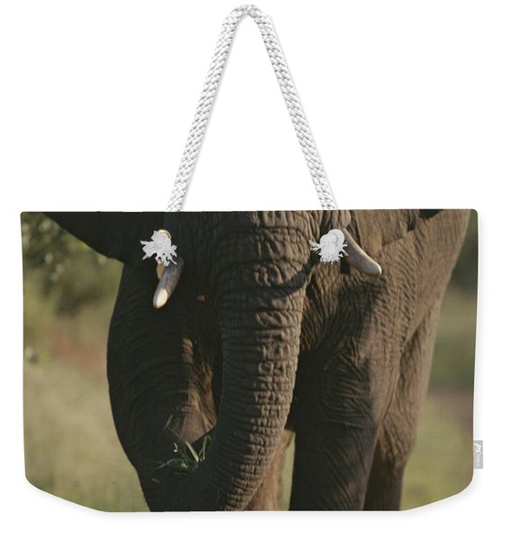 A Portrait Of An African Elephant Weekender Tote Bag