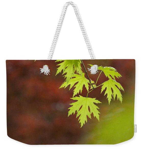 Backlit Maple Leaves On A Branch Weekender Tote Bag