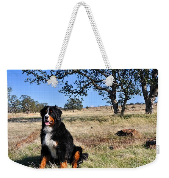 Bernese Mountain Dog In California Chaparral Weekender Tote Bag