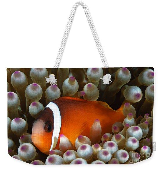 Black Anemonefish, Fiji Weekender Tote Bag