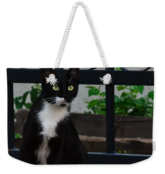 Black Cat On Black Background Weekender Tote Bag