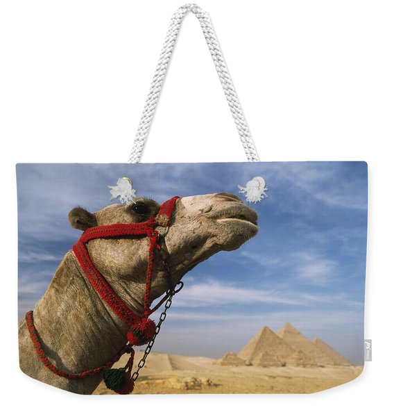 Camel In Front Of Great Pyramids Of Giza Weekender Tote Bag