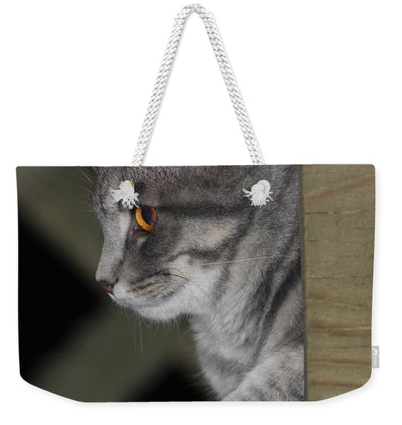 Cat On Steps Weekender Tote Bag
