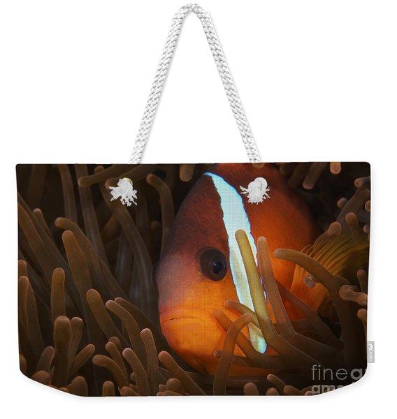 Cinnamon Clownfish In Its Host Anemone Weekender Tote Bag