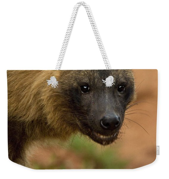 Close Up Portrait Of A Brown Hyena Weekender Tote Bag