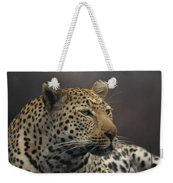 Close View Of A Leopard Panthera Pardus Weekender Tote Bag