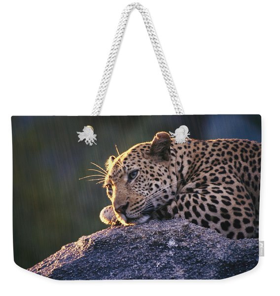 Close View Of A Leopard Sunning Himself Weekender Tote Bag