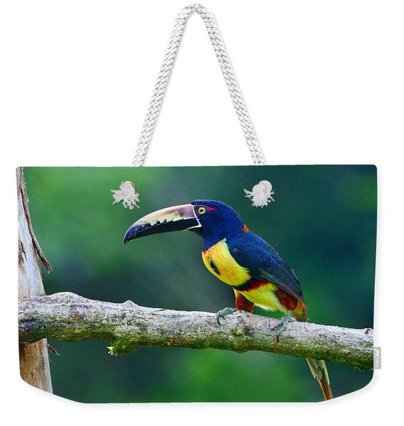 Collared Aracari Weekender Tote Bag