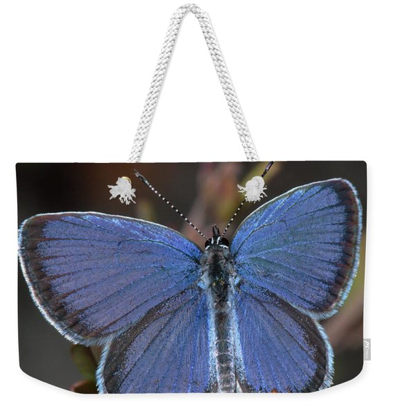 Eastern Tailed Blue Butterfly Weekender Tote Bag
