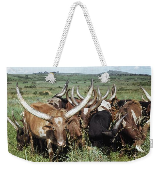 Fantastically Long-horned Ankole Cattle Weekender Tote Bag