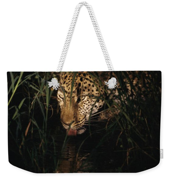 Five-year-old Male Leopard Tjololo Laps Weekender Tote Bag
