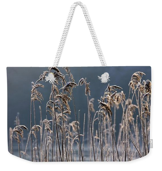 Frozen Reeds At The Shore Of A Lake Weekender Tote Bag