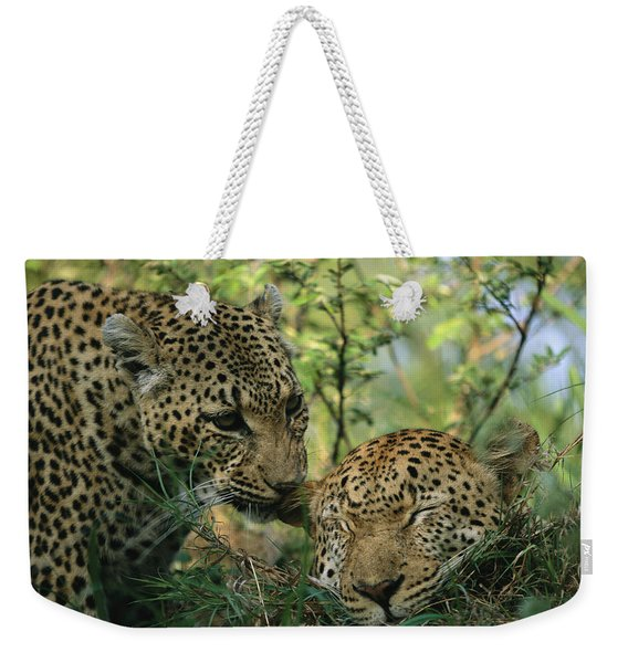 Leopards Nuzzle In The Heat Of The Day Weekender Tote Bag