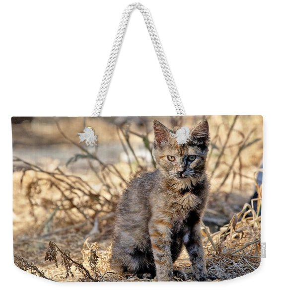 Lone Feral Kitten Weekender Tote Bag