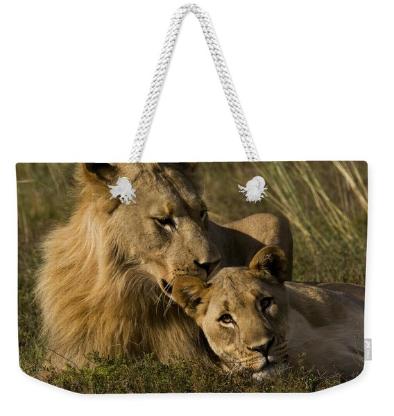 Male And Female African Lions, Panthera Weekender Tote Bag