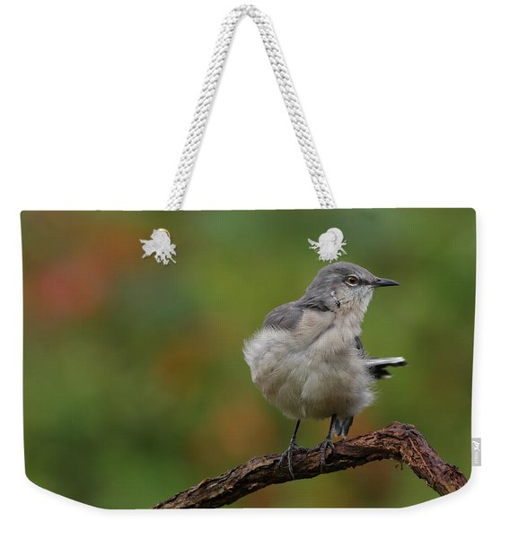 Mocking Bird Perched In The Wind Weekender Tote Bag