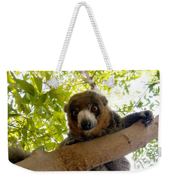 Mongoose Lemur Weekender Tote Bag