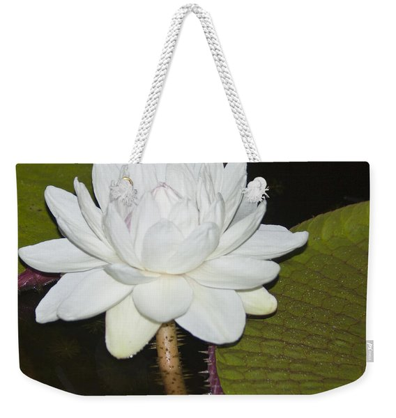Nocturnal Blossom Of Victoria Lily Weekender Tote Bag