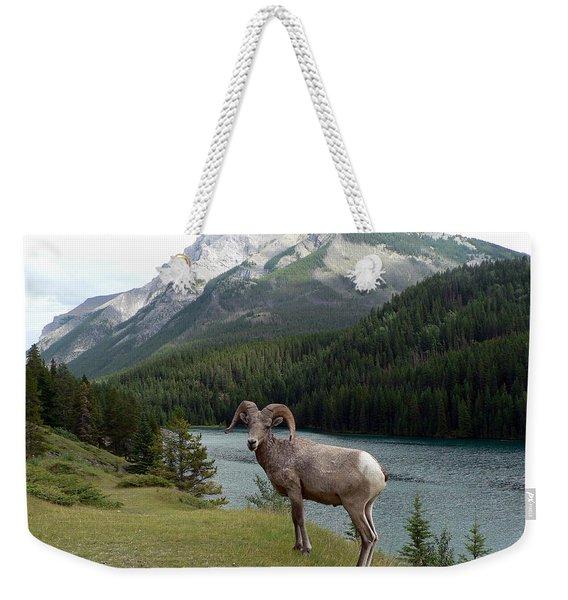 Portrait Of A Bighorn Sheep At Lake Minnewanka  Weekender Tote Bag