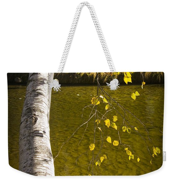 Salmon During The Fall Migration In The Little Manistee River In Michigan No. 0887 Weekender Tote Bag