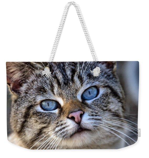 Siamese Feral Cat Weekender Tote Bag