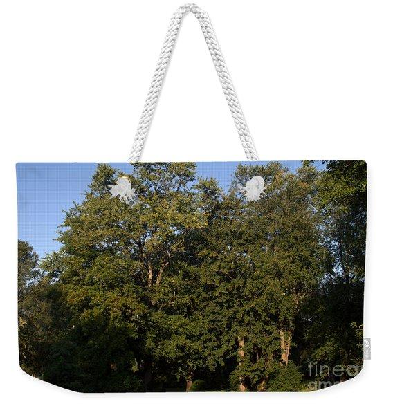 Stand Of Sugar Maple Trees Weekender Tote Bag